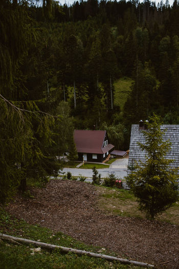 House amidst trees and plants growing in forest