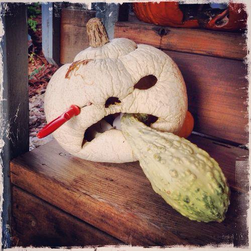 The Last Pumpkin AMPt_community Oggl Pumpkin Halloween Hangover