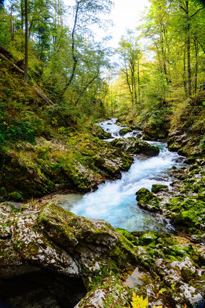 Forest Tree Plant Water Beauty In Nature Land Scenics - Nature Nature Tranquility Non-urban Scene No People Day Tranquil Scene Downloading Growth Flowing Water Environment Solid Rock Stream - Flowing Water Flowing Outdoors WoodLand Rainforest