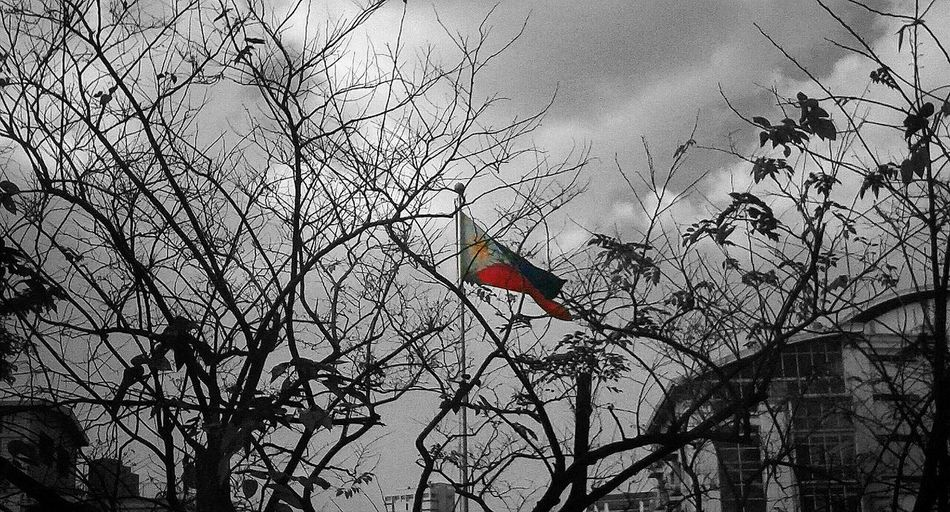 just saw it from the window. From My Point Of View Mobilephotography Crappyshot Amateurphotography Colorsplash Eyem Black And White Flag Dead Tree Figurative Manila, Philippines