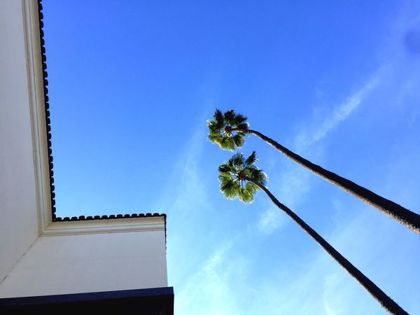 Togetherness! Los Angeles, California Los Angeles Downtown Sky Low Angle View Blue Sky Tree Flower Nature Growth Beauty In Nature Palm Tree Architecture Built Structure Outdoors Close-up Fragility Day Go Higher