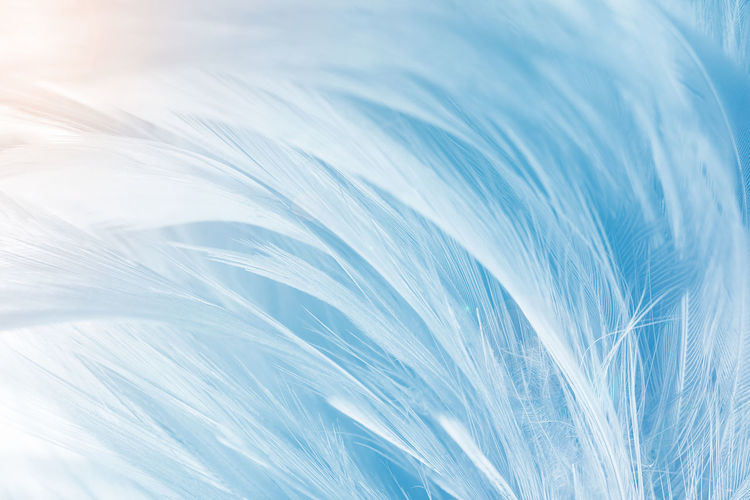 Blue with orange light color trends feather texture background