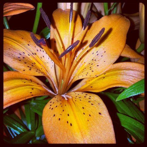 Floresconmagia Floresefrutas Flores Flower Photography Flowers,Plants & Garden Natureza 🐦🌳 Flowerlovers Nature Flowers