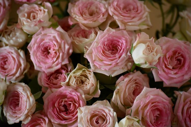 Those are a few of my favorite things.. Beauty Beauty In Nature Bouquet Bunch Of Flowers Bunch Of Roses Close-up Day Florist Flower Flower Head Freshness Love Nature No People Outdoors Peony  Petal Pink Color Pink Roses Close-up Rose - Flower Roses Softness