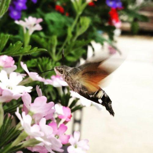 Wildlife Moth