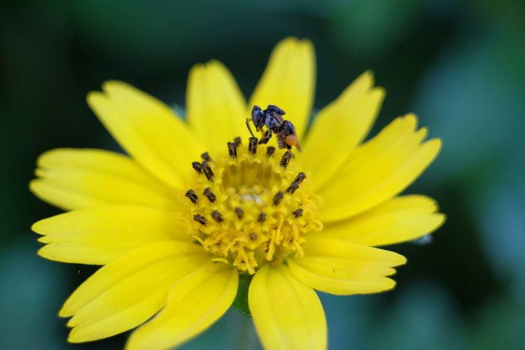 Zinnia  Animal Antenna Grasshopper Slug Symbiotic Relationship Butterfly - Insect Praying Mantis Cosmos Flower Honey Bee Pollination Flowering Plant Parallel Bug Mollusk Arthropod Snail Stamen Pollen