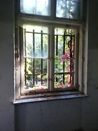 Close-up of window in home