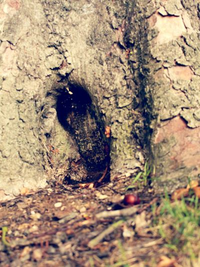Tree Tree Trunk Texture Opening Door Nature Abstract Close Up Detail Groundlevel