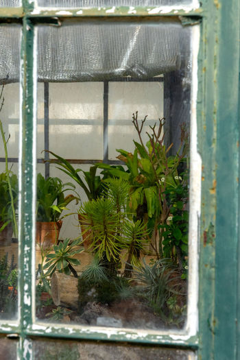 Potted plants seen through window