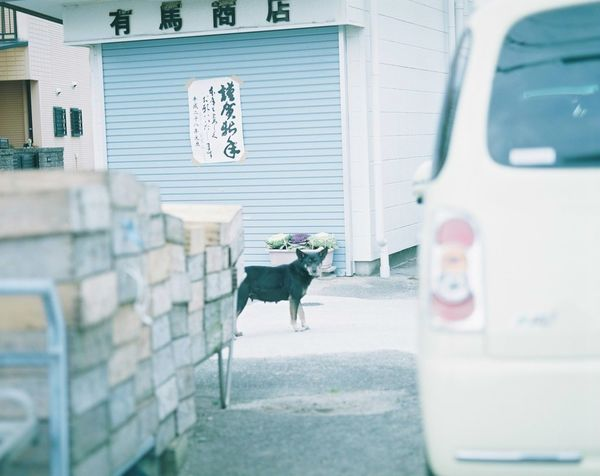 EyeEm Best Shots EyeEm EyeEm Gallery Photo Photography Filmphotography Film Filmphoto Filmcamera Japan 120mm Mamiya RB67