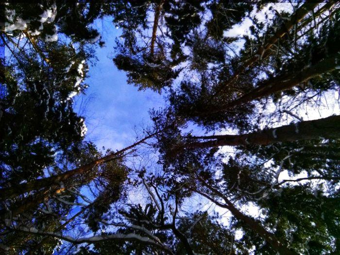 Tree Branch Forest Tree Trunk Sky