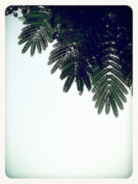 EyeEm Best Shots Green Green Green!  Simplify EyeEm Nature Lover
