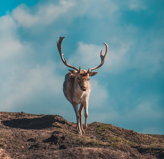 Deer standing on rock