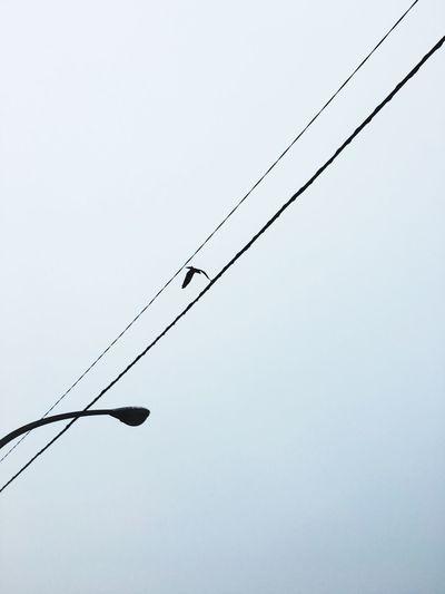 Bird Photography Cable Bird Cloudy