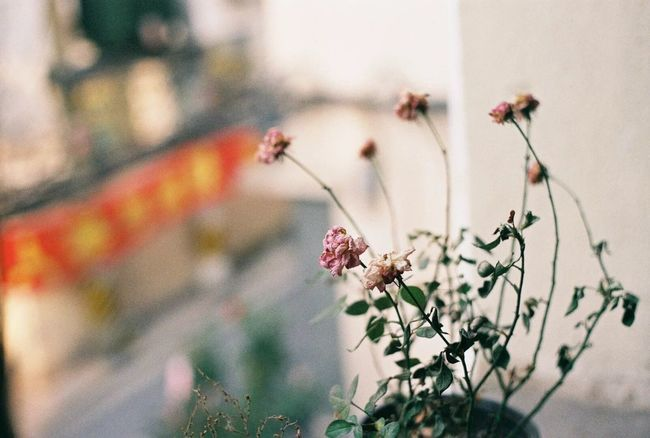Flowers Flowers, Nature And Beauty Flower Photography Nature Natural Beauty EyeEm Best Shots EyeEm Nature Lover EyeEm Gallery EyeEm Film Filmisnotdead Film Photography Filming Capture The Moment Remembering This Moment Sweet♡