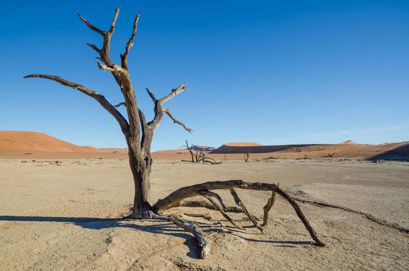 Deadvlei Blue Sky Nature Namibia Africa African Landscape Sossusvlei Desert Namib Namib Desert Sesriem Sesriem, Namibia Dead Tree Tree Dead Plant Fallen Tree Arid Landscape Barren Arid Drought Salt Basin Extreme Terrain Geology Physical Geography Eroded