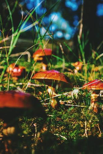 Tarn Hows Nature Mushroom Mushrooms Forest Leaf Close-up Plant Moss WoodLand Fungus Woods Fall