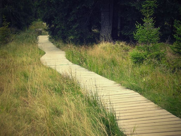 Walkway amidst grass against trees