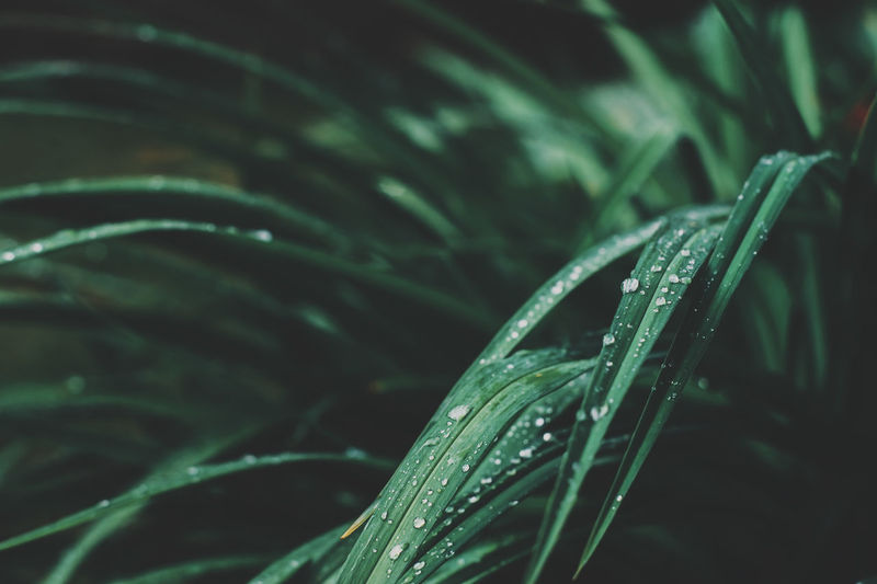 summer natural background. Gentle toned blurred view with raindrops on grass and space for text Growth Green Color Plant Close-up Beauty In Nature Drop Plant Part Leaf Selective Focus Nature No People Water Freshness Wet Day Blade Of Grass Outdoors RainDrop Nature Green Color Wild Garden Summer Botany