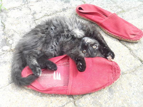 Pussy Cat Cute Pets Cat Funny Cat
