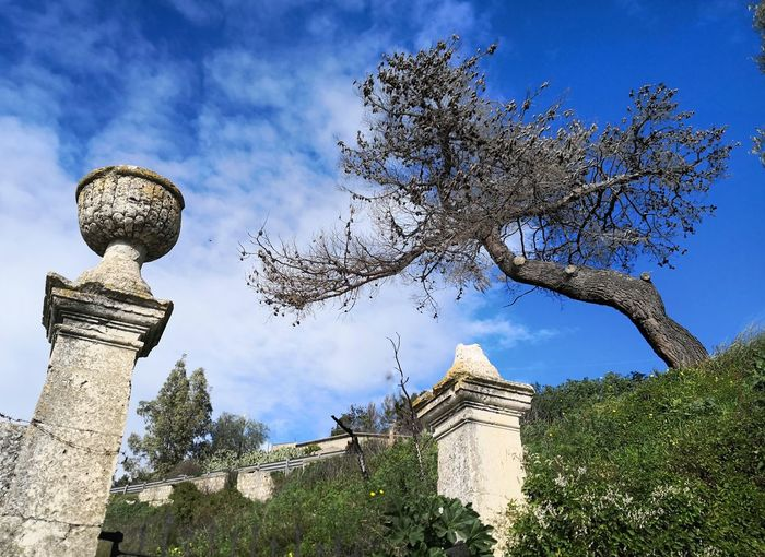 Tree History Sky Architecture Close-up Cloud - Sky Archaeology Amphitheater Ancient Rome Historic