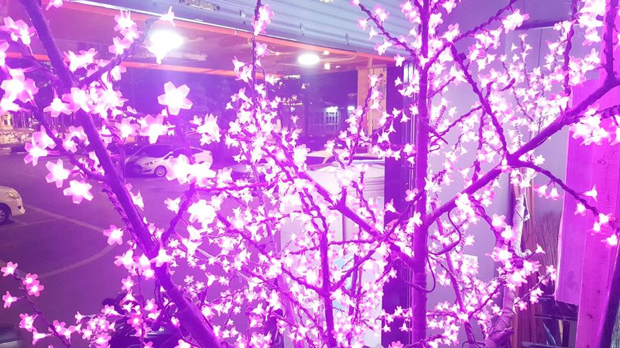 Beautiful light. Flower Pink Color Growth Tree No People Low Angle View Branch Beauty In Nature Nature Fragility Indoors  Day Freshness Close-up Electricity  Illuminated Abstract
