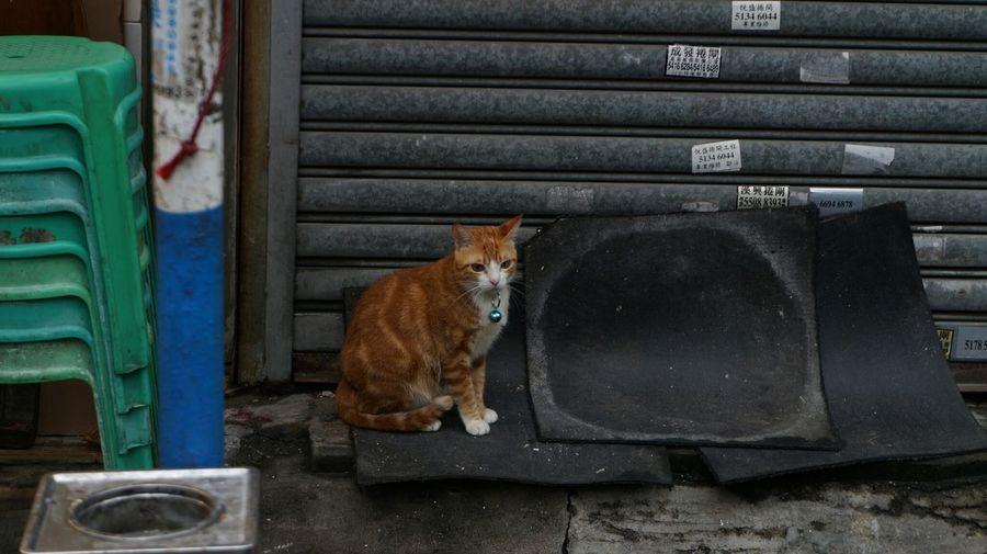 Cat Cats Cats 🐱 Cat Photography 貓 貓咪 貓星人 猫 Neko Meow 喵星人 Gato Kot Chat Gatto Katze First Eyeem Photo 猫の写真 店猫 Hkcats