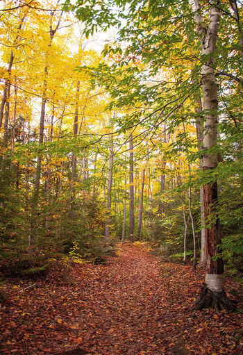 Fall Walk Fall October Canada Ontario JackNobre 2015  Walk Explore Discover  Nature