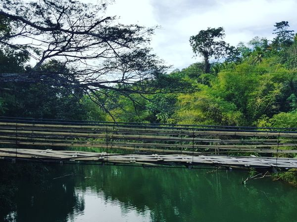 Bridge Tree Water Nature Sky Reflection Green Color No People Cloud - Sky Outdoors Lake Beauty In Nature Day Growth Travel Destinations Philippines Summer Tourism River Adventure Tranquil Scene Investing In Quality Of Life Your Ticket To Europe The Week On EyeEm Lost In The Landscape