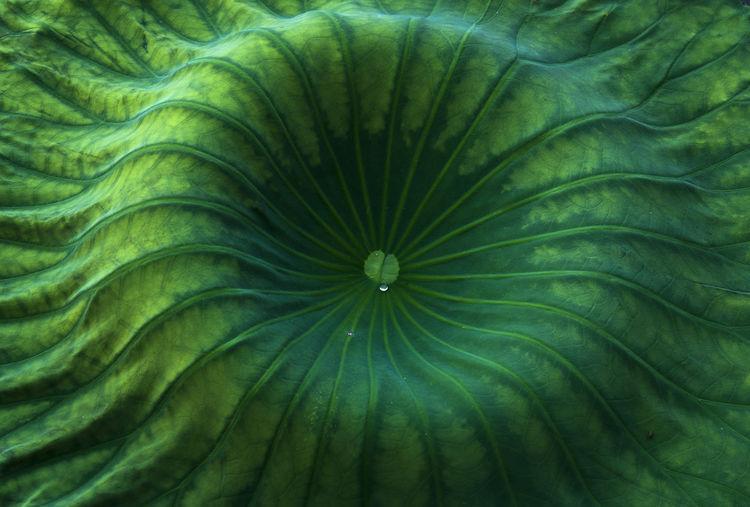 Curtatone Green
