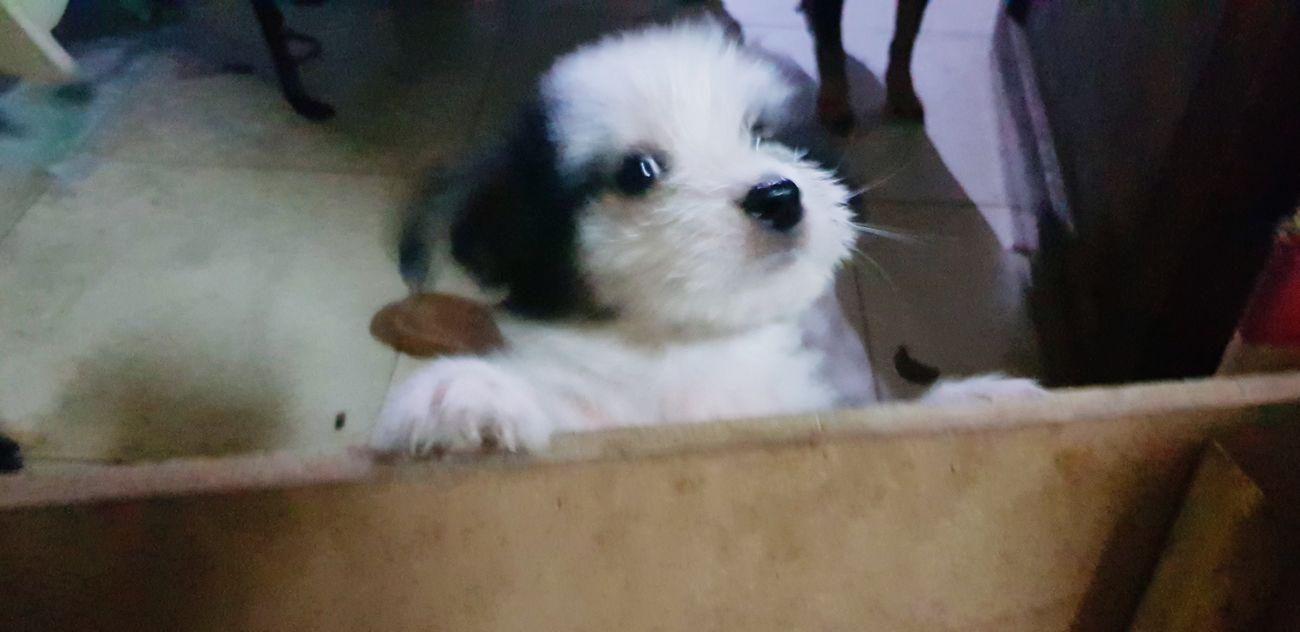 Thằng hàng xóm Pets Dog Puppy Cute Young Animal Close-up