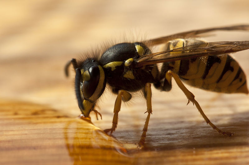Macro shot of insect on wooden table