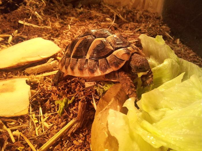 #Greek #Greek Tortoises #Haustier #Nature  #pet #Schildkröte Reptile Wildlife