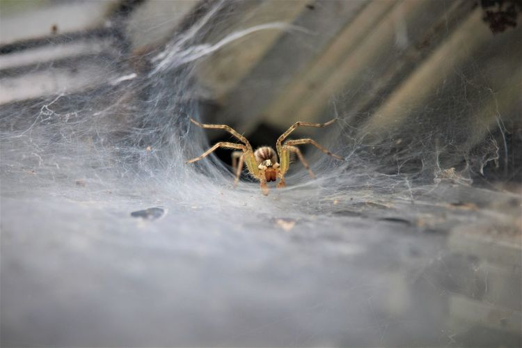 Spider in my
