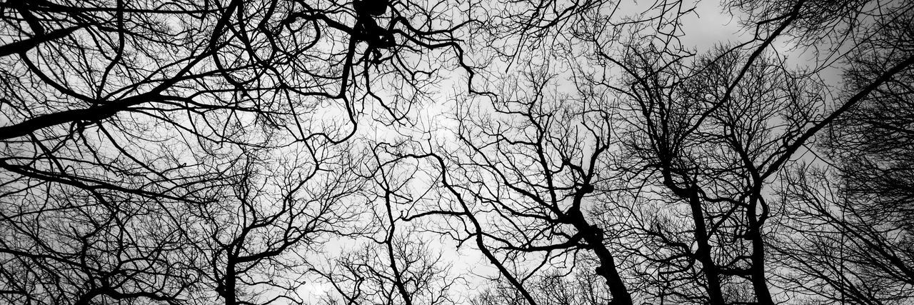 tree tops Blackandwhite Tree Branch Backgrounds Full Frame Bare Tree Pattern Abstract Sky Close-up