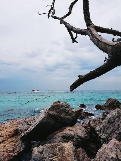 เกาะล้าน เกาะล้าน หาดตายาย Tree Water Sea Beach Sky
