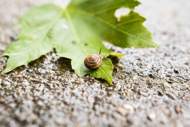 Animal Themes Animals In The Wild Wildlife Stone One Animal Selective Focus Leaf Plant Snail Nature Zoology Growth Freshness Green Color Outdoors Day Fragility Surface Level Crawling Beauty In Nature