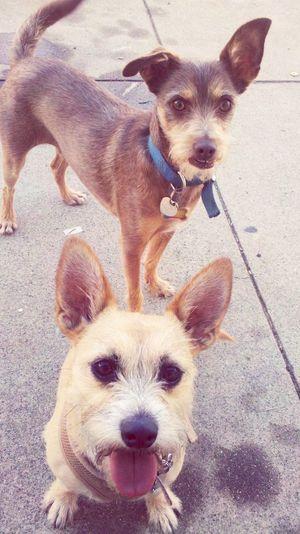 Summer Dogs
