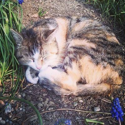Miciottina!! Cat Love