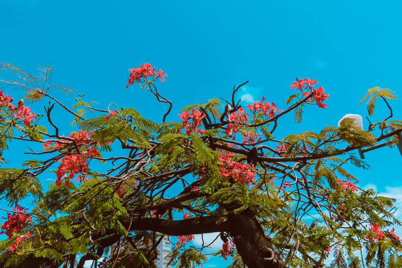 Flowers and the sky Beauty In Nature Blue Branch Clear Sky Close-up Day Growth Low Angle View Nature No People Outdoors Sky Tree