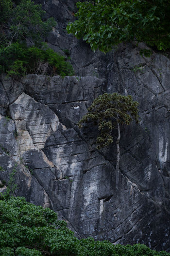 Rock Plant Rock
