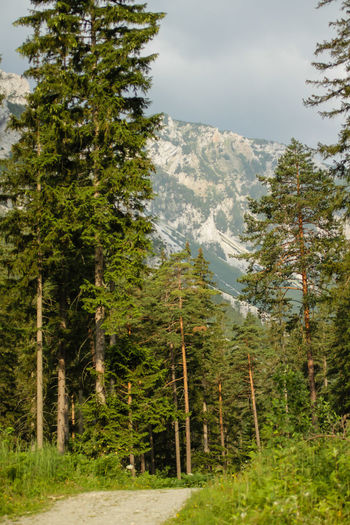 Austria Austrian Flag Butterfly Forest Green Lake Lake Tourism Wildlife Wood Lost In The Landscape