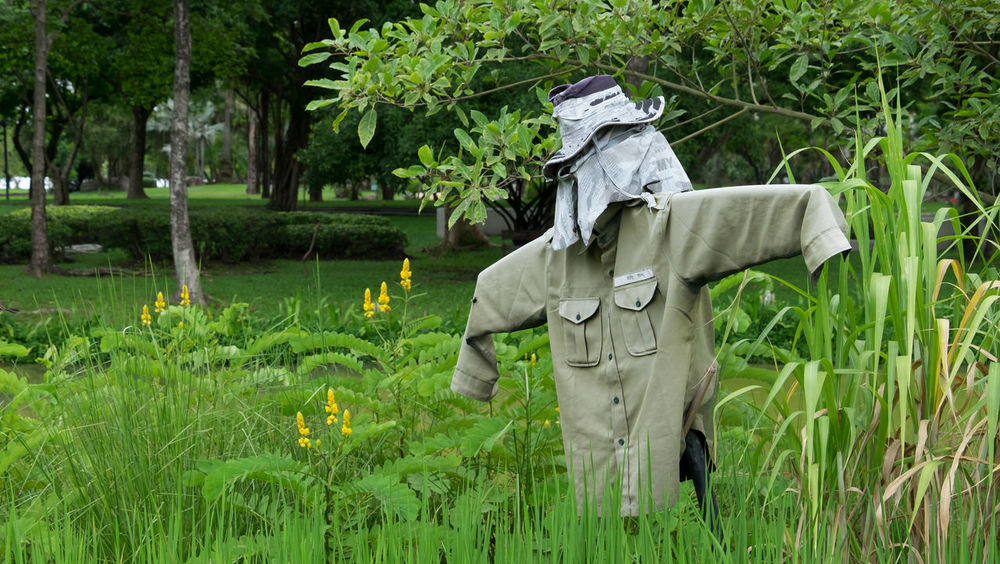 scarecrow in the farm. Crop  Day Farm Farmer Growth Men Nature Outdoors Plant Scarecrow Scarecrow In The Form Of Rapacious Bird Scarecrow...👒🌾