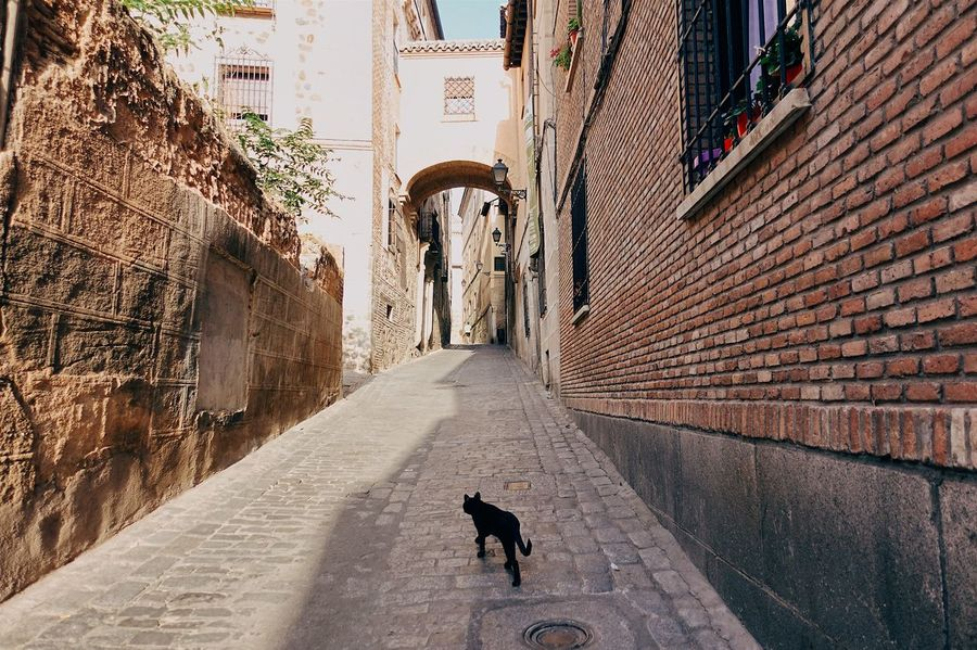 Animal Themes Architecture Black BLackCat Built Structure Cat City City Life Cityscape Historic Historical Building Old Buildings Old Town One Animal Outdoors Pets SPAIN Street Streetphotography Sunset The Way Forward Travel Travel Destinations Walking Walking Around Live For The Story The Street Photographer - 2017 EyeEm Awards The Architect - 2017 EyeEm Awards The Great Outdoors - 2017 EyeEm Awards Place Of Heart An Eye For Travel