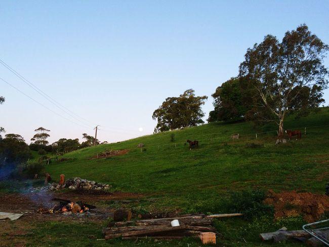 Full Moon Rising Moon Paddock Horses Bonfire Relaxing IPhoneography Adelaide, South Australia