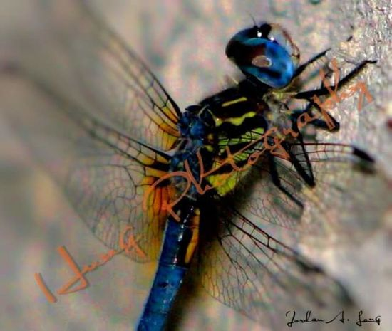 Fine Art Photography MyPhotography Naturephotography Nature Beauty Nature Photography Beautiful Great_captures_nature Photolife Aspects Of Life Taking Photos Simple Things In Life Photography Photos Around You Beauty In Nature Photographylovers Insect Photo Insect_perfection Insect Paparazzi Insect Insects Beautiful Nature Insect Photography Insects  Hello World Nightphotography Simple