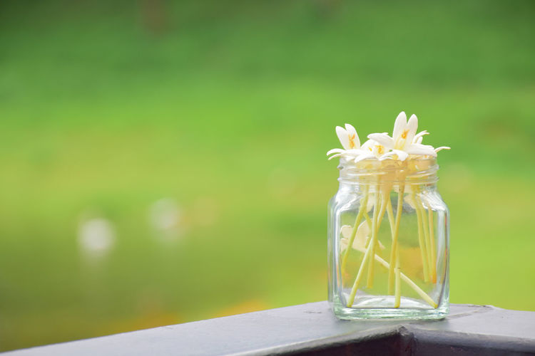 Close-up of glass of white flower on table