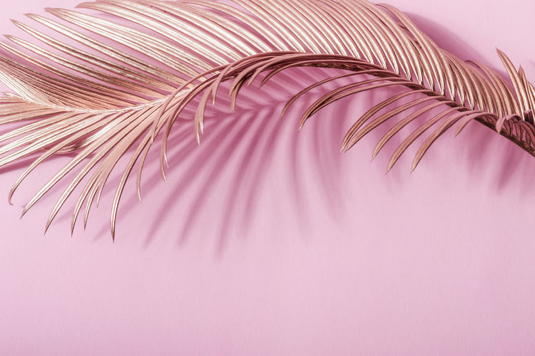 Close-up of feather against pink background