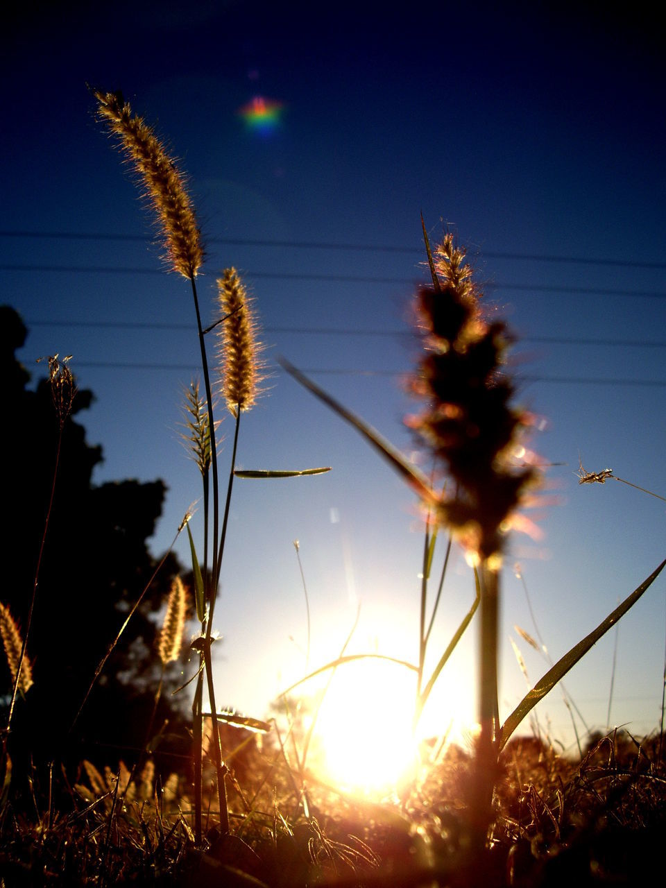 Close-Up Of Reed Plant Against Bright Sun