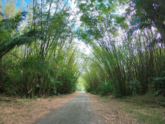 Trinidad And Tobago Nature Photography Outdoors Nature Nature_collection Scenics Naturelovers Bamboo Bamboo - Plant Bamboo Grove Bamboo Cathedral Chaguaramas Tree Grass Plant Green Color Growing Pathway Narrow Lane Woods Countryside Destinations